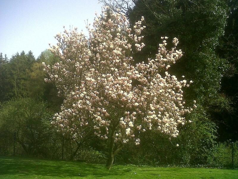 Frühling am Welzerberg